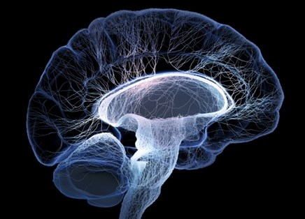 Diabetes and the Brain: The Effects of Hyperglycemia on Brain Health