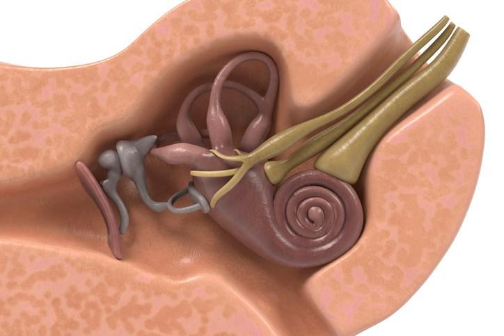 Vestibular Rehabilitation Effective Treatment for Vestibular Migraine
