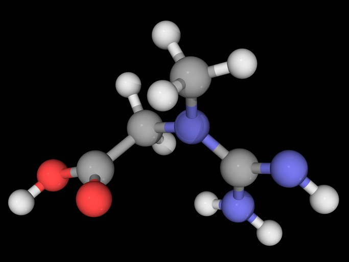 Creatine had previously shown evidence of slowing functional decline.
