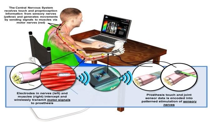 DARPA Program Sets Out to Restore Sensation in Prosthetics