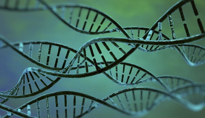 In Rett syndrome, long genes are over expressed.