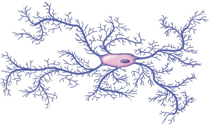 Microglial Activation May Contribute to Depression in Multiple Sclerosis