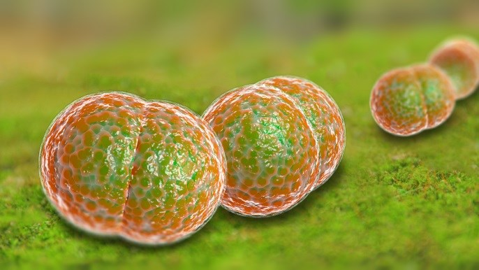 Antineoplastic Agents May Obscure Fungal Meningitis