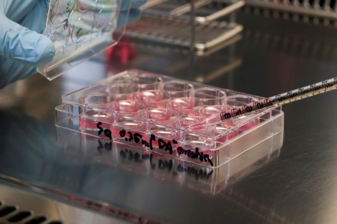 Double Autologous Stem Cell Transplants Boost Survival in Neuroblastoma