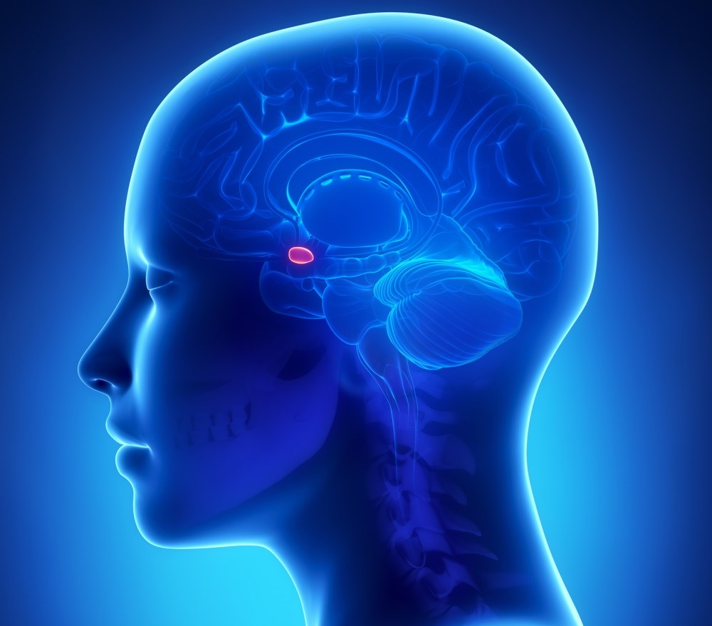 People with elevated activity in the amygdala may be at greater risk of cardiovascular events.