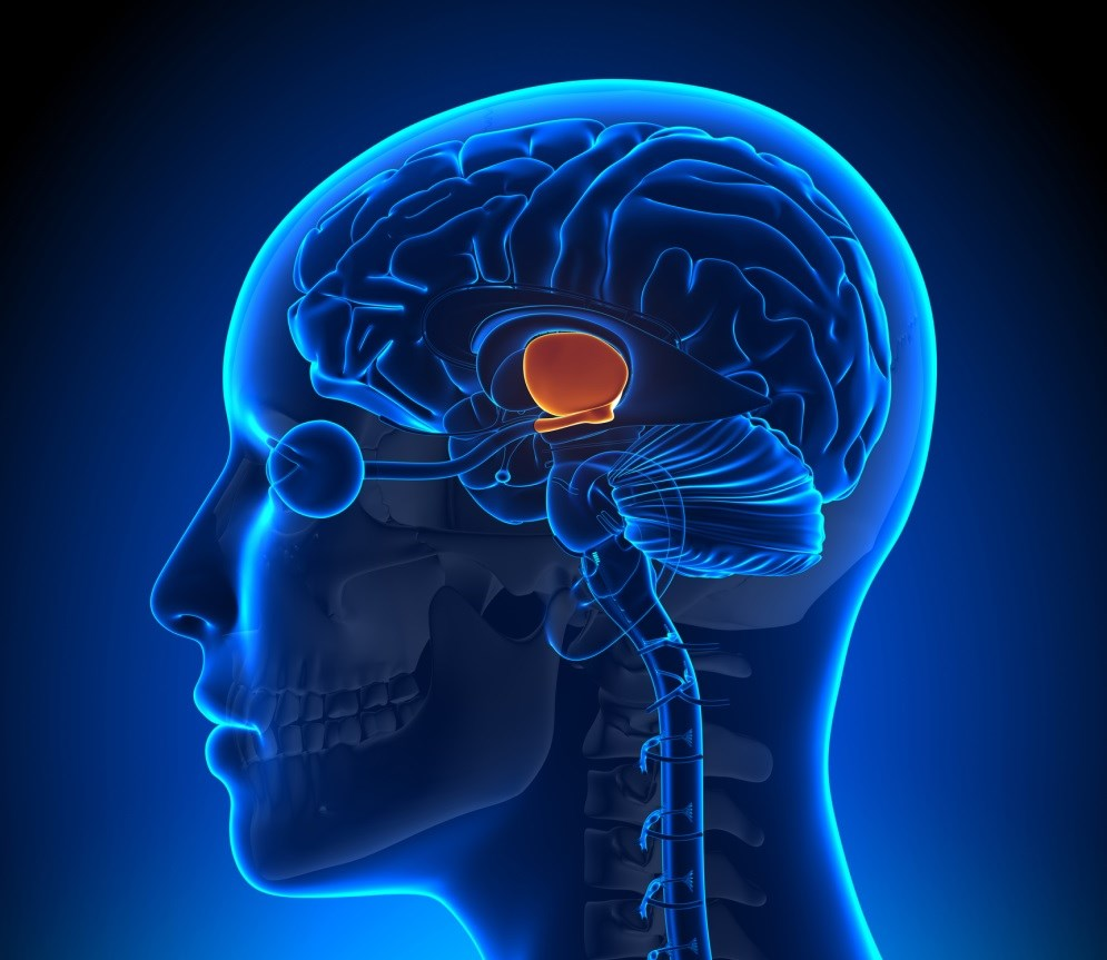 Disrupted Thalamo-Striato-Hypothalamic Function May Serve as a Good Biomarker for Parkinson Disease