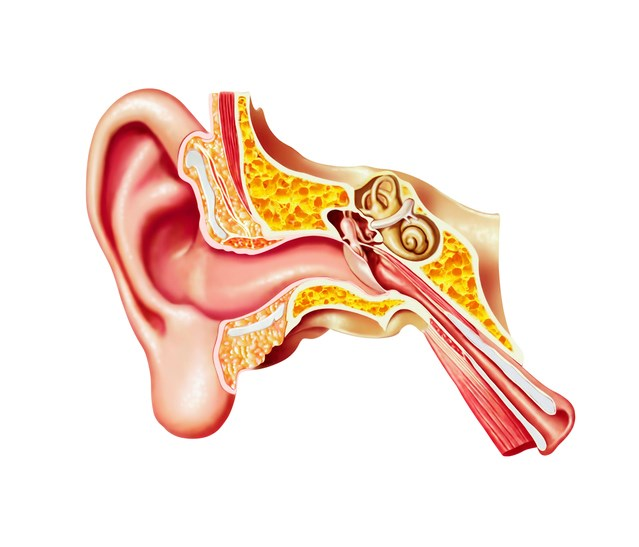 Tinnitus is 3-fold more likely to develop in patients with versus without chronic kidney disease, new study shows.