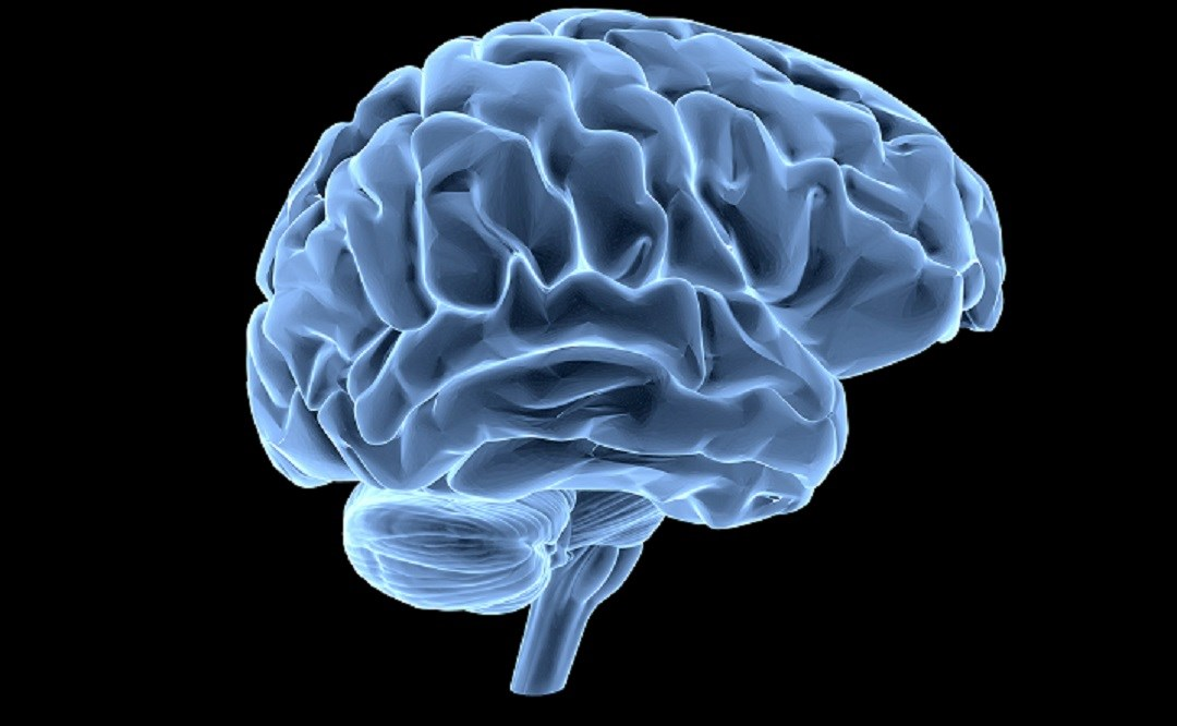 Cerebral morphometric alterations can help detect ADHD in children