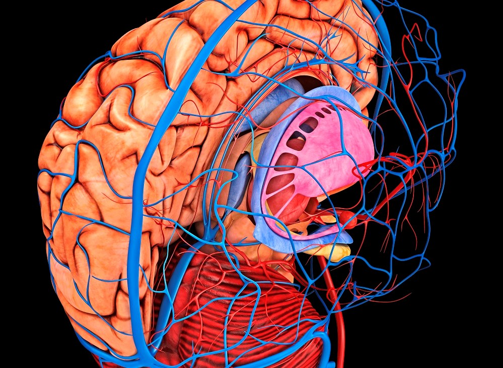 Cerebral Blood Flow Significantly Reduced After Hemodialysis