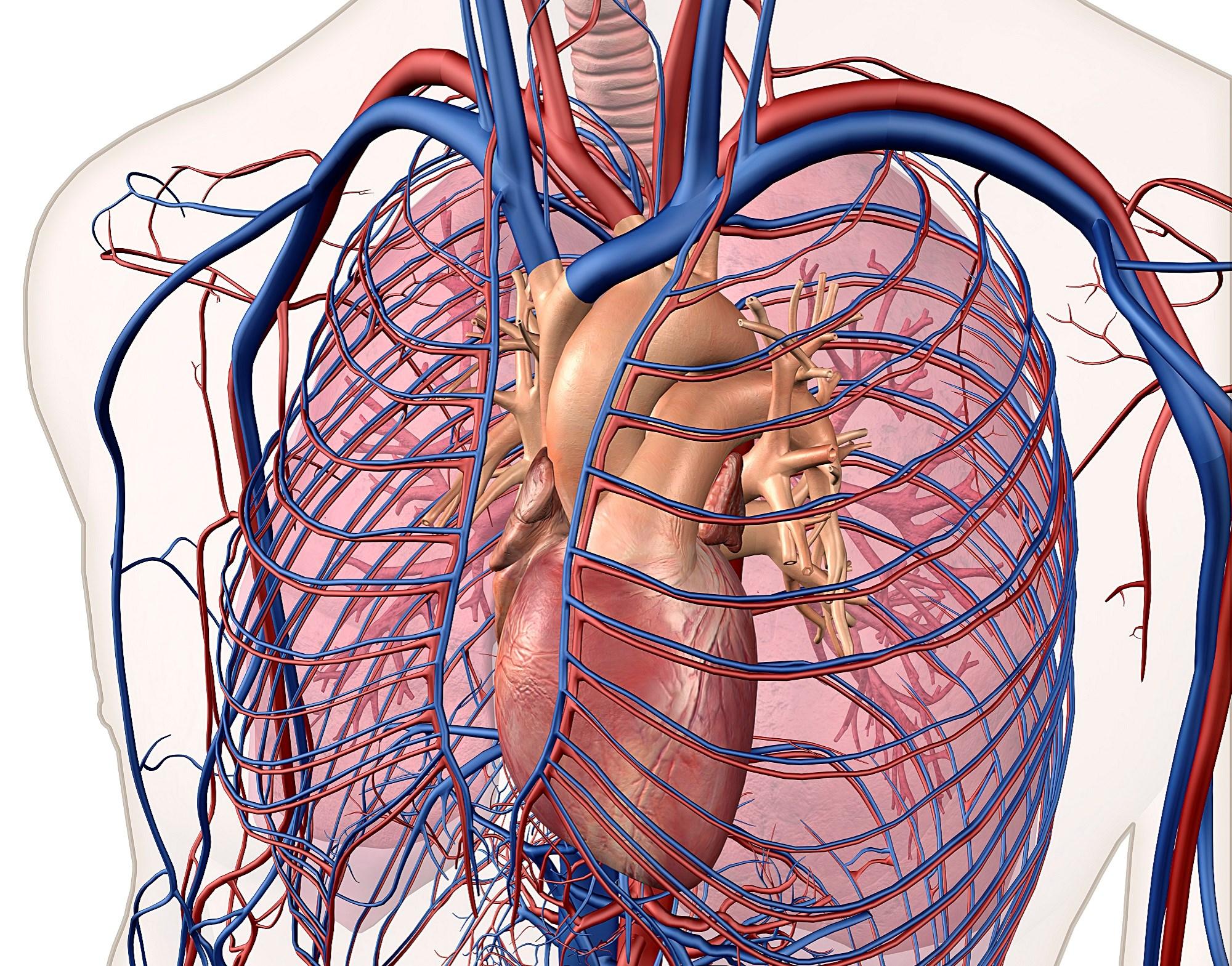 Left Atrial Enlargement Linked to Vascular Brain Injury