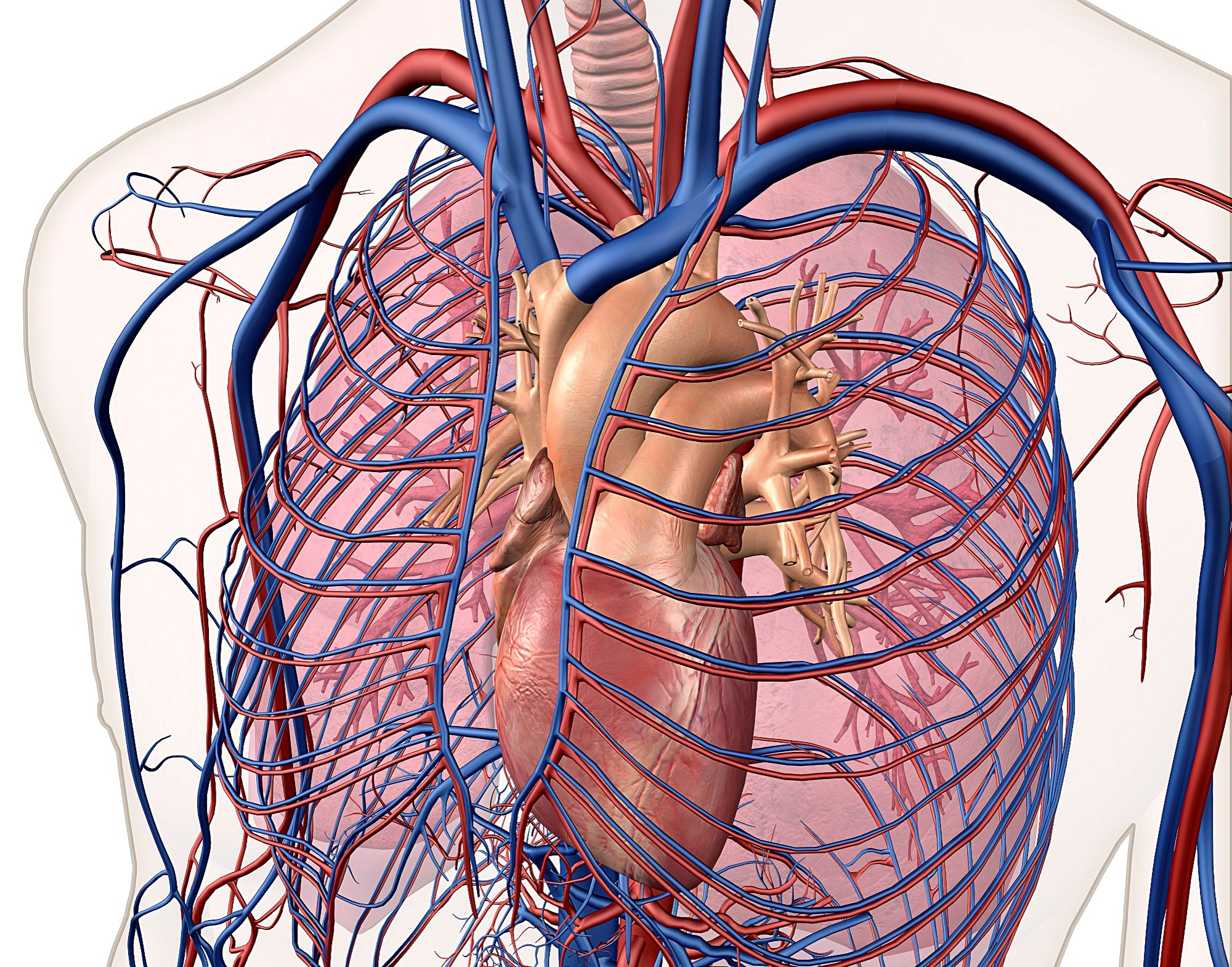 Left Atrial Enlargement Linked to Vascular Brain Injury