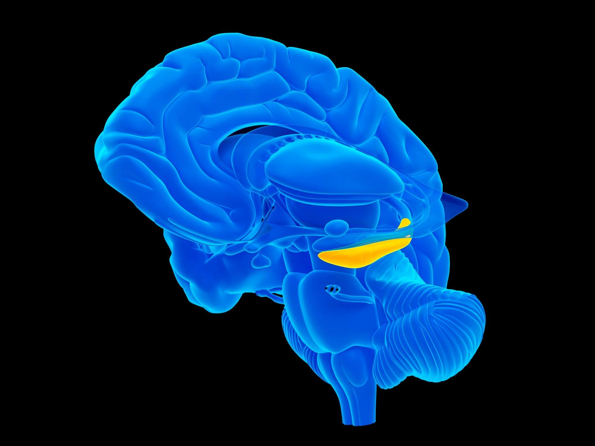 Autoimmune Diseases Increase Hippocampal Sclerosis Risk in Nonagenarians